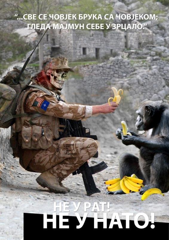 poster-majmuni