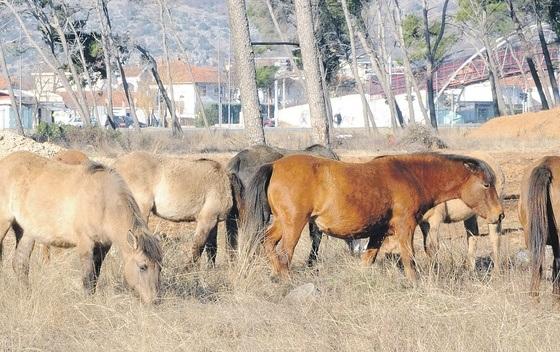 krdo konja