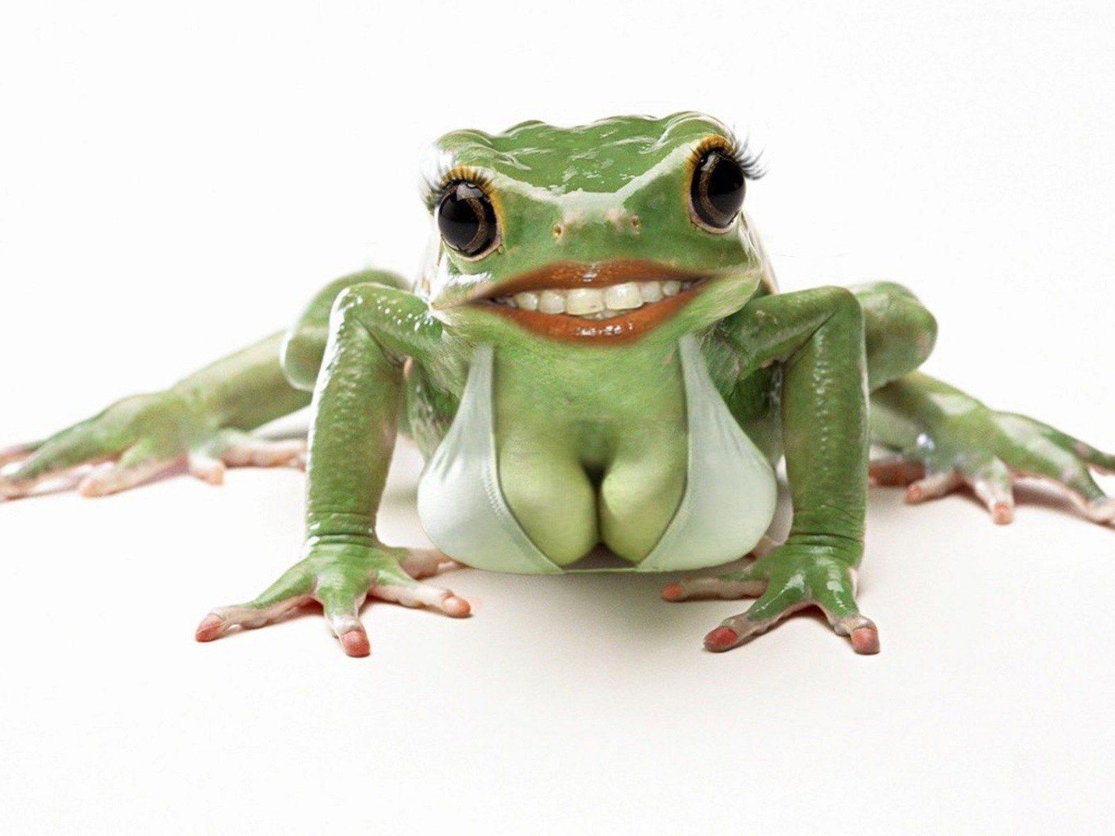 Надписью мое, картинки с надписью лягушки